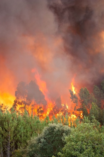 Incendio forestal en un bosque de Portugal